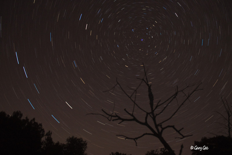 Star Trails Photography - Dead Tree Branch