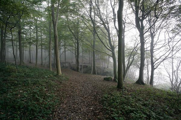 Wald im Nebel an der Steilkueste von Schwedeneck, Schleswig-Holstein