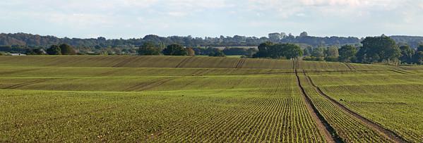 Ein Feld mit Treckerspuren bei Ehlersdorf, Ostholstein.