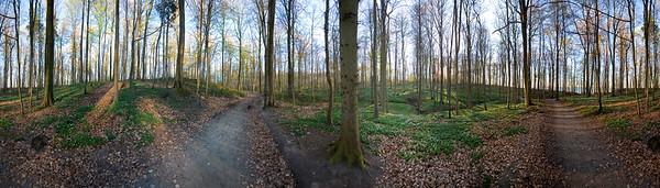 18.04.2009 Wald bei Schwedeneck / 360°-Panorama