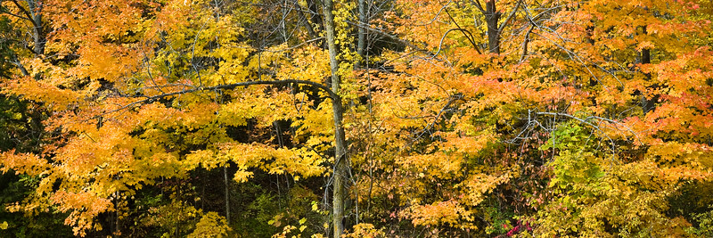 Fall Colors - North Kettle Moraine State Forest, WI