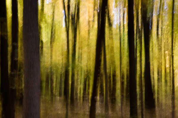 Vertical Blur - North Kettle Moraine State Forest, WI