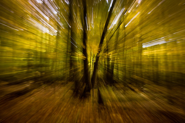 Zoom Blur - North Kettle Moraine State Forest, WI