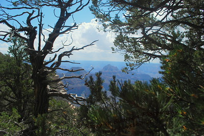 Grand Canyon-North Rim-1