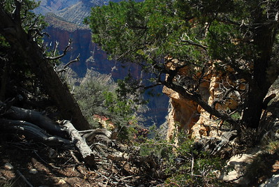 Grand Canyon-North Rim-9