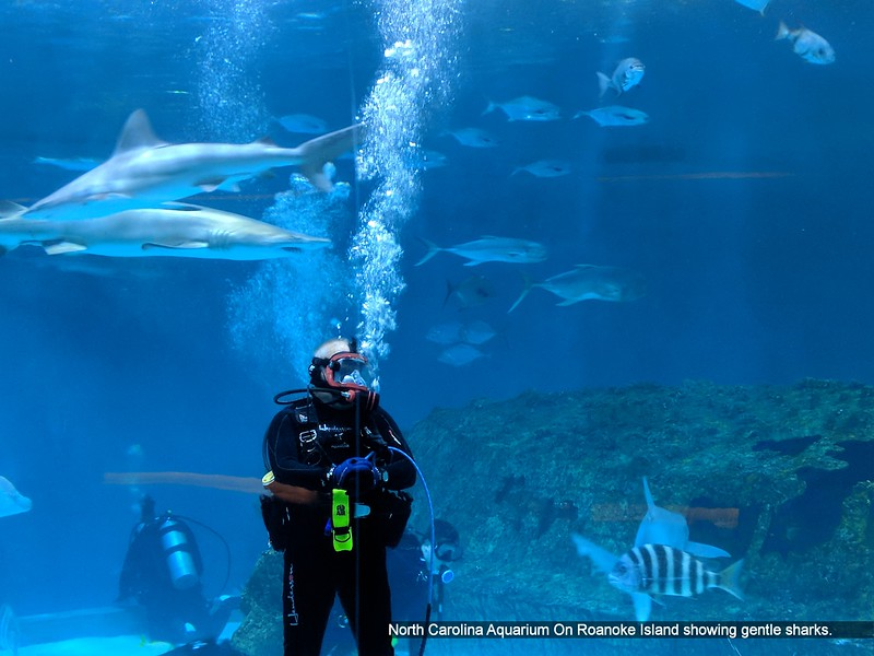 North Carolina Aquarium On Roanoke Island showing gentle sharks.