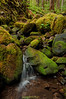 Rain Forest Stream<br /> Olympic National Park