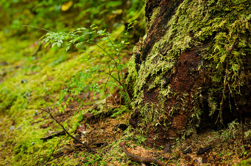 New Growth<br /> Olympic National Park