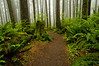 Trail through the forest<br /> Second Beach Trail<br /> Olympic National Park