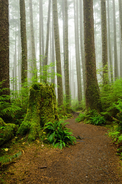 Olympic Forest<br /> Olympic National Park