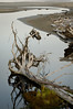 Reflections on Kalaloch Creek<br /> Olympic National Park
