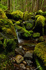 Flowing Stream along Sol Duc Trail<br /> Olympic National Park