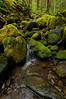 Stream on Sol Duc Trail<br /> Olympic National Park