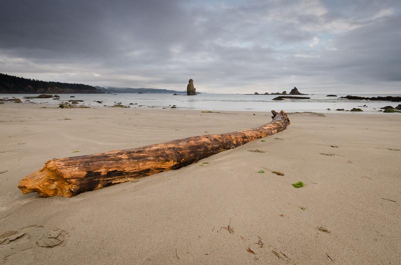 Splintered Log<br /> Olympic National Park