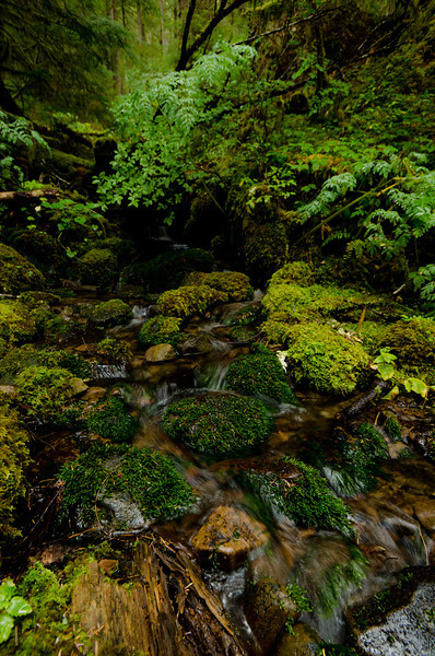 Quiet Brook<br /> Olympic National Park