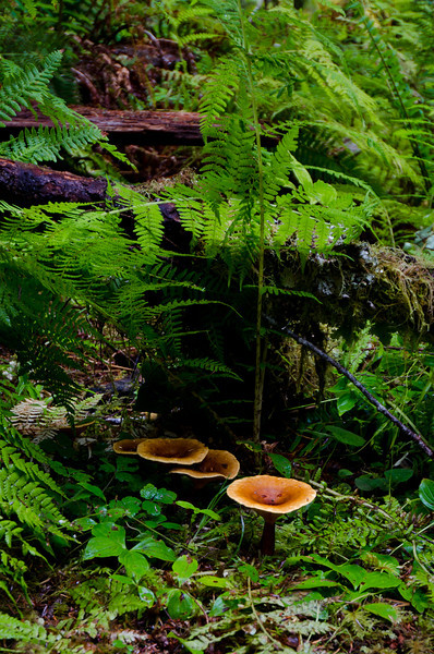 Mushrooms<br /> Olympic National Park