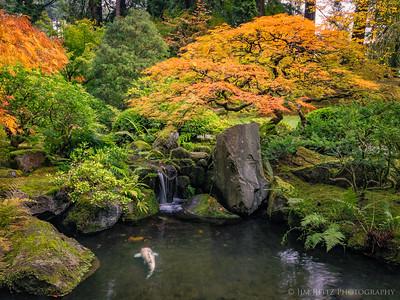 Koi pond, maple, and waterfall. Portland Japanese Garden