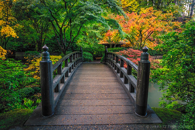 Bridge to autumn.