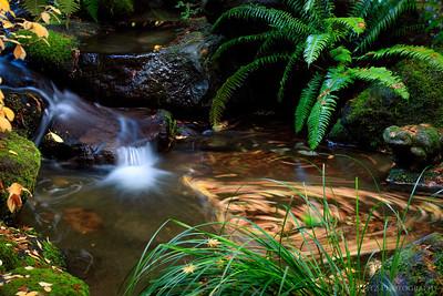 Whirlpool of leaves, Portland Japanese Garden.