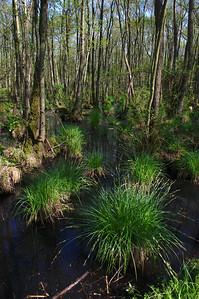 Impressionen im Darßwald