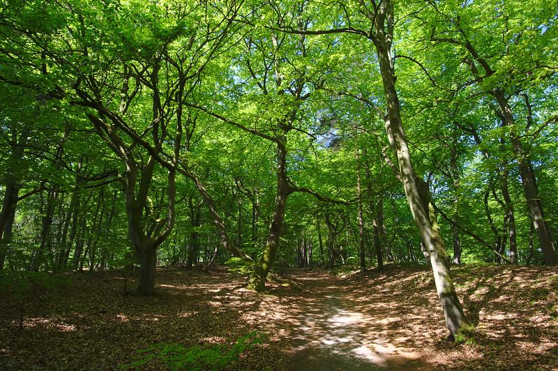 Weg zum Weststrand im Darßwald