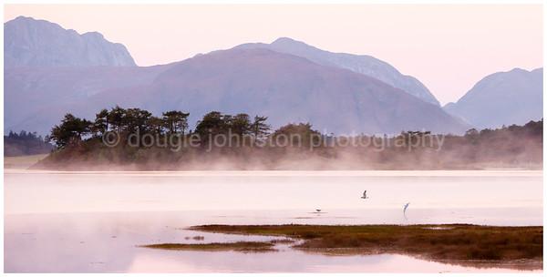 Wader & gulls, Loch Leven & Ardgour