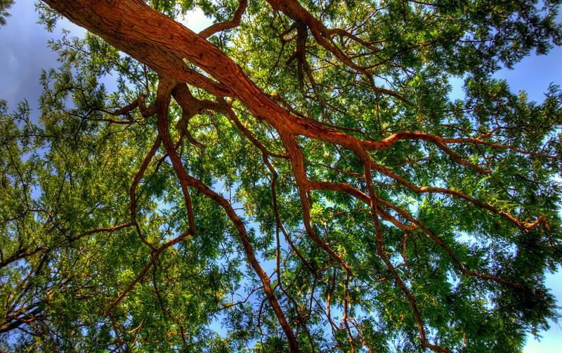 DSC_8377_tree_palouse_falls