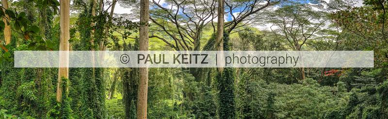 Manoa Valley Falls Trail, Honolulu, HI (4/2019)
