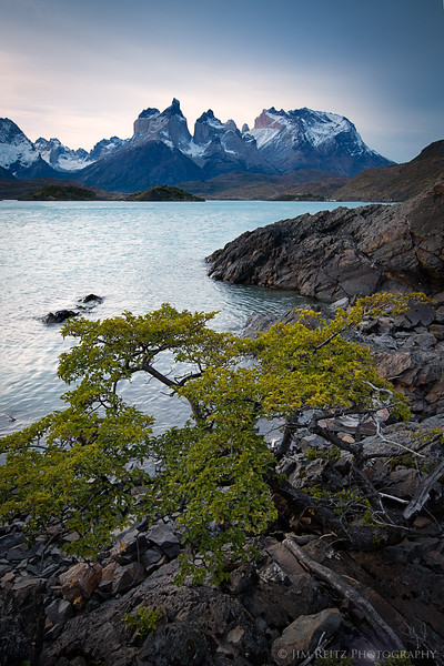 A delicate bonsai-like tree survives on the rocky, windswept shores of Lake Pehoe in Chile.