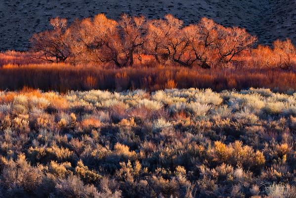 Wild Radiance Eastern Sierras, California