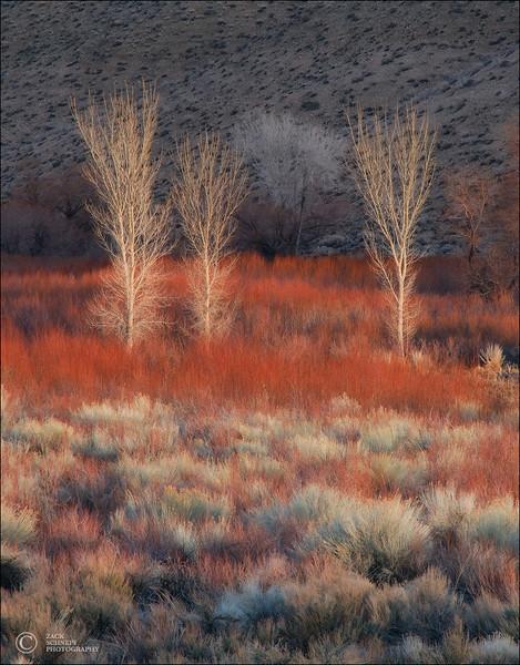 High Desert Texture Garden
