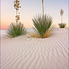 "<font color=""#FFFFFF"" size=""4"" face=""Verdana, Arial, Helvetica, sans-serif"">White Sand Sentinels</font><br> White Sands, New Mexico"