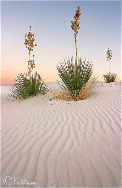 """<font color=""""#FFFFFF"""" size=""""4"""" face=""""Verdana, Arial, Helvetica, sans-serif"""">White Sand Sentinels</font><br> White Sands, New Mexico"""