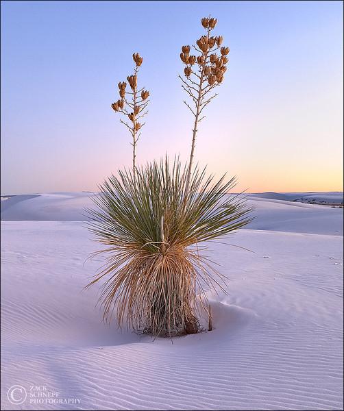 """<font color=""""#FFFFFF"""" size=""""4"""" face=""""Verdana, Arial, Helvetica, sans-serif"""">Yucca Sunset</font><br> White Sands, New Mexico"""