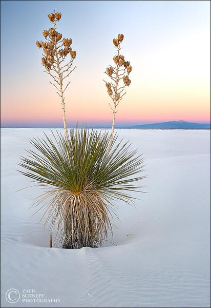 """<font color=""""#FFFFFF"""" size=""""4"""" face=""""Verdana, Arial, Helvetica, sans-serif"""">White Sands Sunset</font><br> White Sands, New Mexico"""