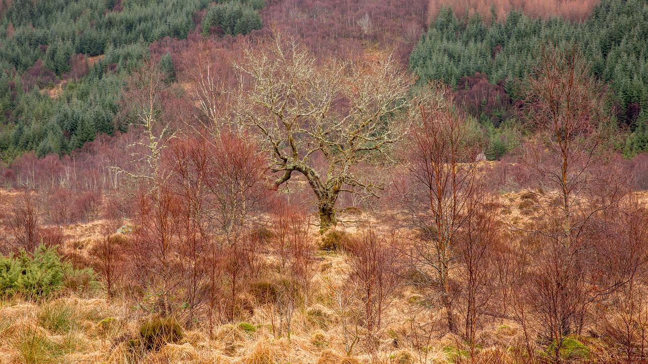 Oak Forest Ardnamurchan