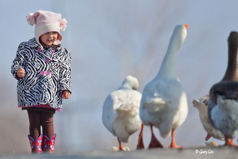 Geese & Cute Girl