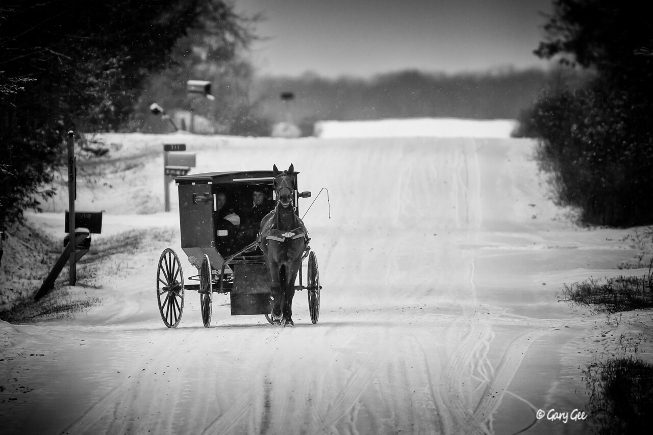 Amish buggy in the winter - Mio, MI