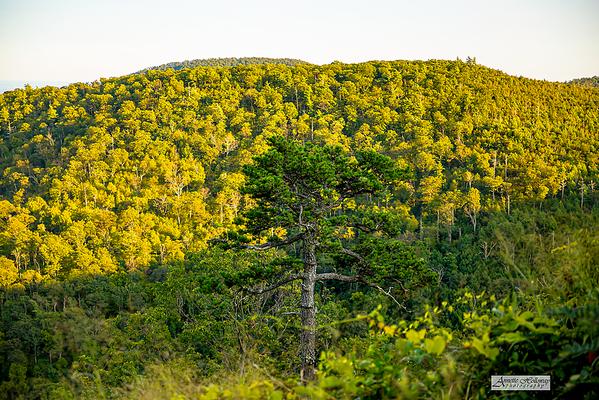 Shenandoah National Park VA 9-23-20 by Annette Holloway Photography