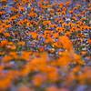 Wildflowerbed