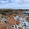 Agulhas Lichen Coast