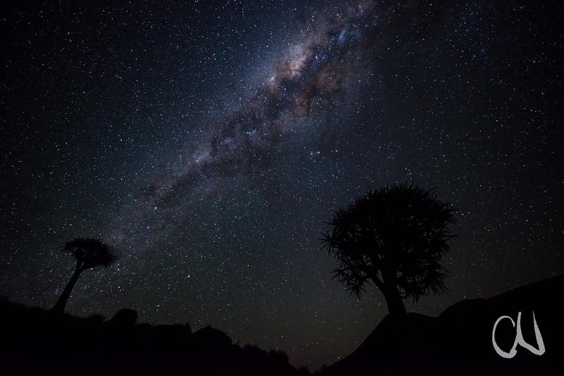Quiver Tree Galaxy