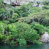 natural coastal forest at river shore, Küstenwald am Flussufer, Mkambati Nature Reserve, Eastern Cape, Ostkap, ehemalige Transkei, South Africa, Südafrika