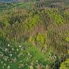 Streuobstwiesen im Frühling am Südwesthang des Schönbuch zwischen Tübingen und Herrenberg, Luftaufnahmen, Flug, fruit orchards in spring bloom at the southwestern limits of the schönbuch forest between tübingen and herrenberg in southwestern Germany, Baden-Württemberg, aerial view