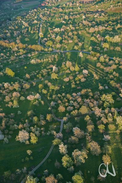 blühende Kirschen, Birnen, Äpfel, Obstbäume, Streuobstwiese, Luftaufnahme, bei Tübingen, Deutschland