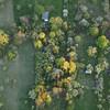 Streuobstwiesen aus der Luft, , bei Tübingen