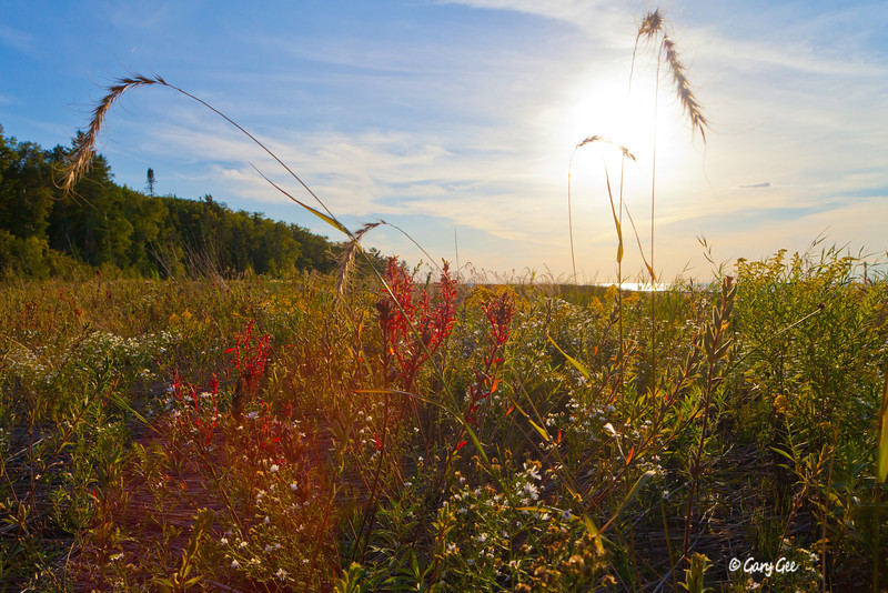 Sturgeon Bay Wilderness State Park late summer foliage before sunset