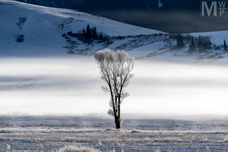 Frost & Fog