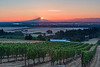 Seven Springs Vineyard, Salem, Oregon