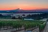 Seven Springs Vineyard, Salem, Oregon